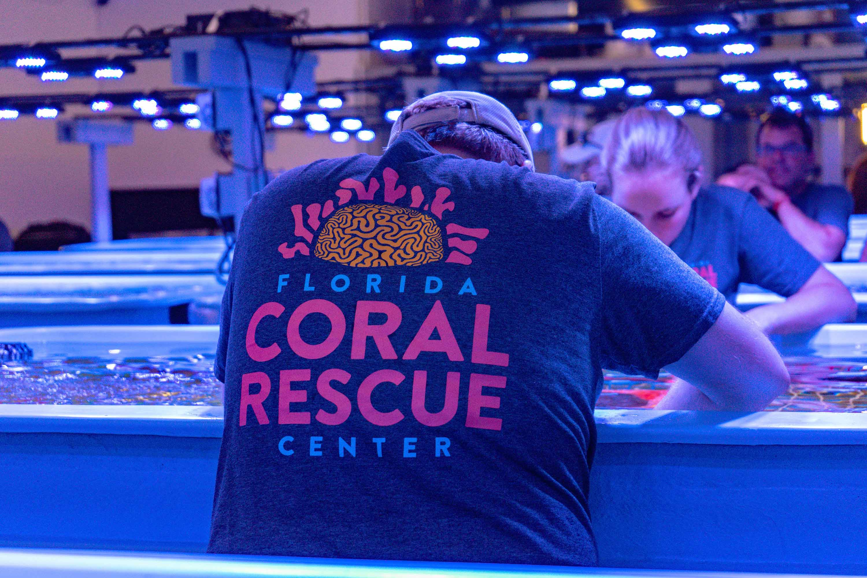 Photo of at staff member working with the coral. Their shirt has the Florida Coral Rescue Center logo