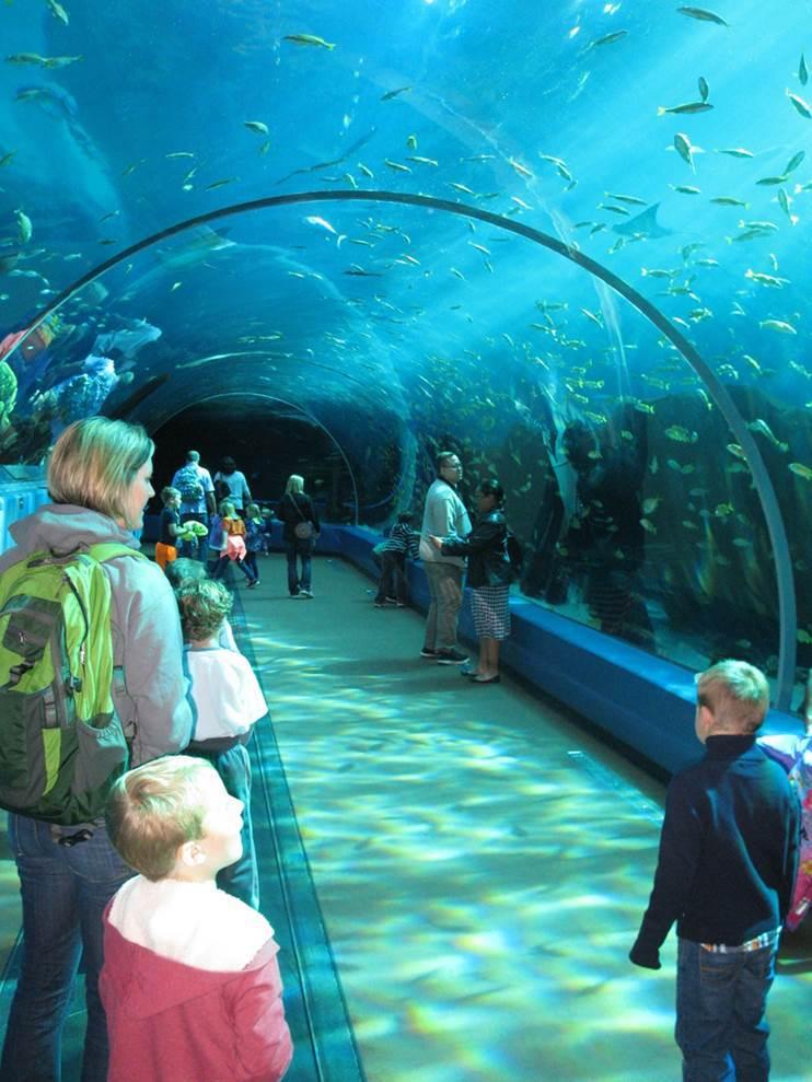 Families walking through a tunnel at Georgia Aquarium