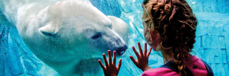 Jobs   Association Of Zoos And Aquariums   Aquarium Biologist Iu2013 Mammals  And Reptiles
