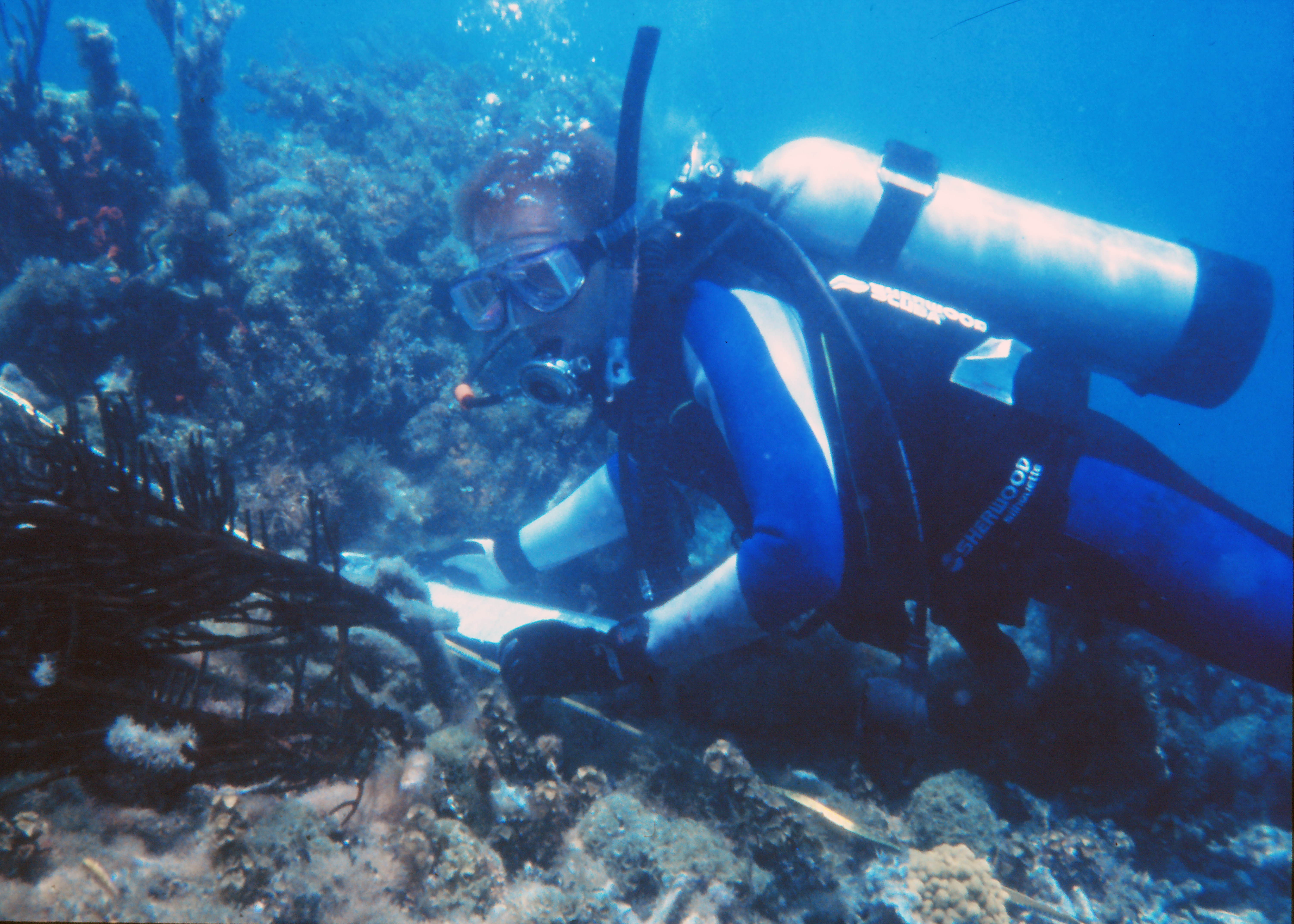 Diver works with coral