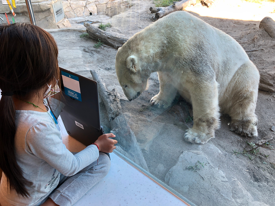 A Zoo School student shows her work to a polar bear through the glass