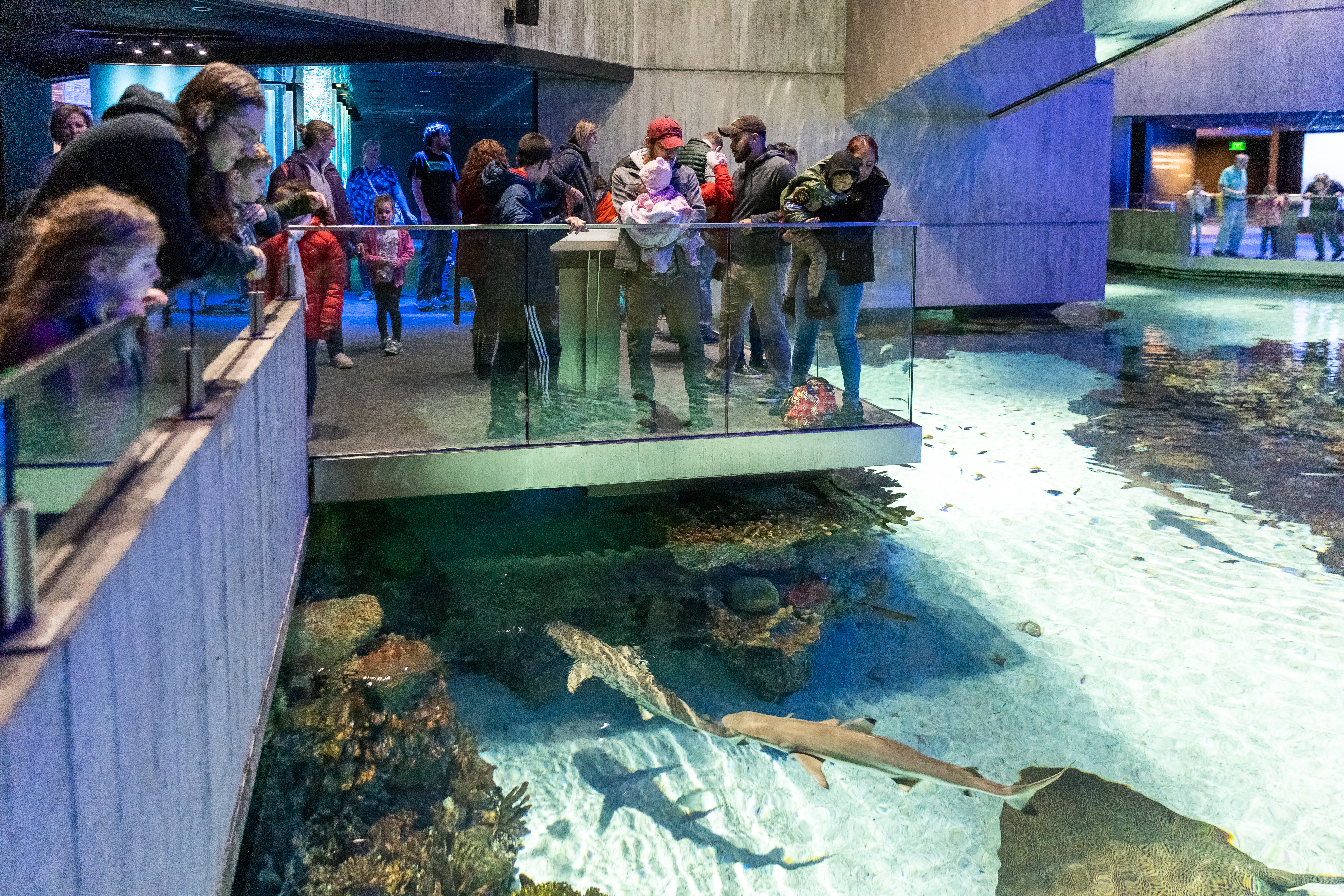 Groups of people looking at sharks in the water at the National Aquarium
