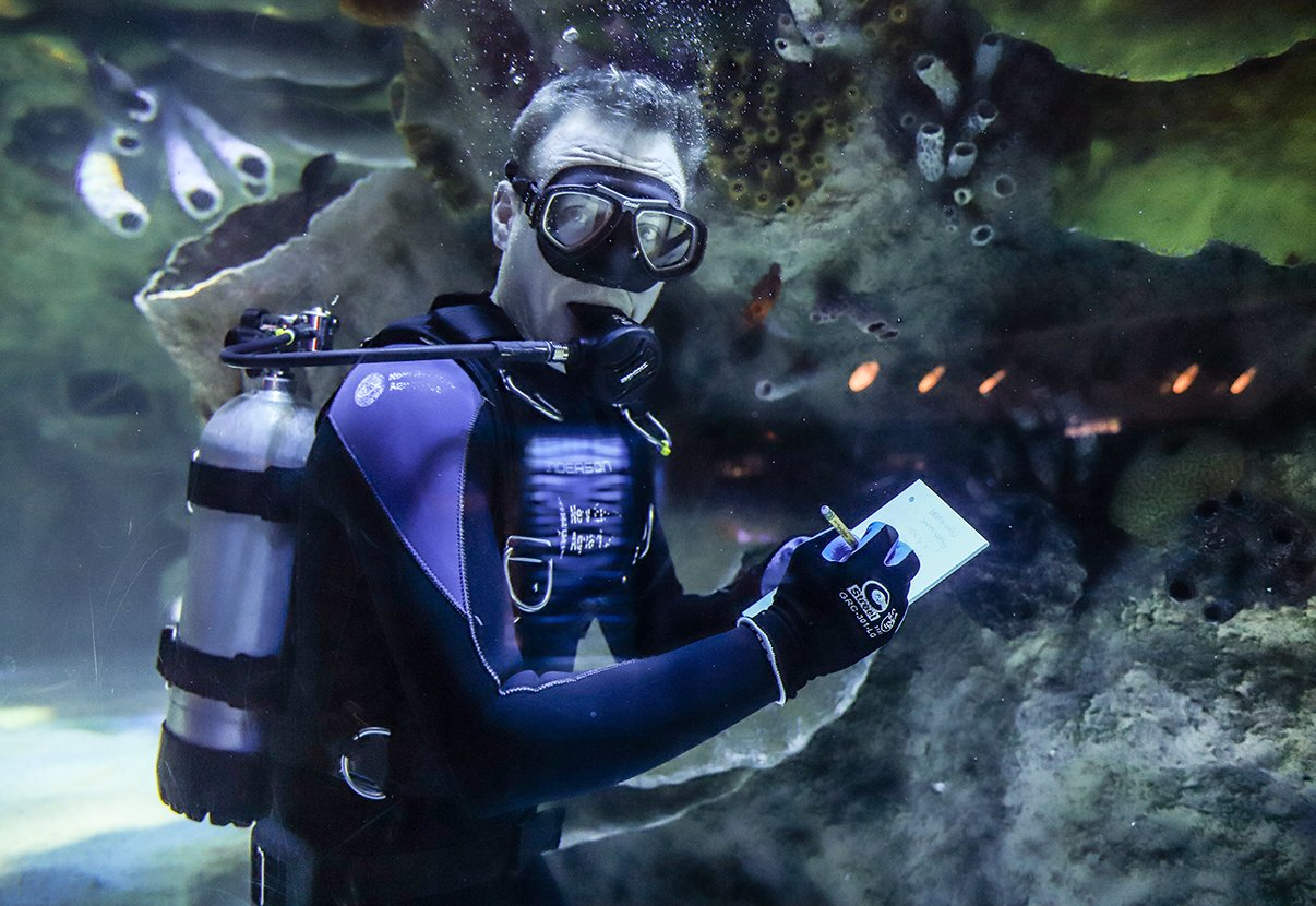 Ocean tank diver at the New England Aquarium