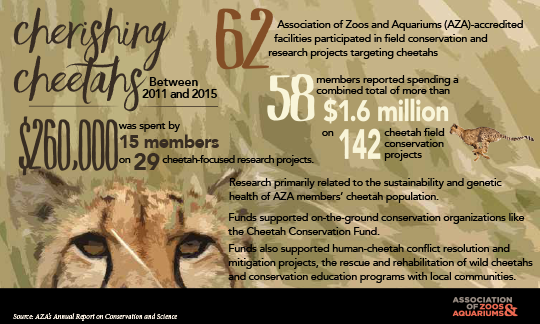 Image of Cheetah conservation infographic