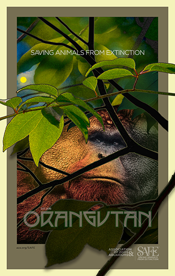 "Poster depicting a orangutan peering through tree branches with headline ""Saving Animals From Extinction"""