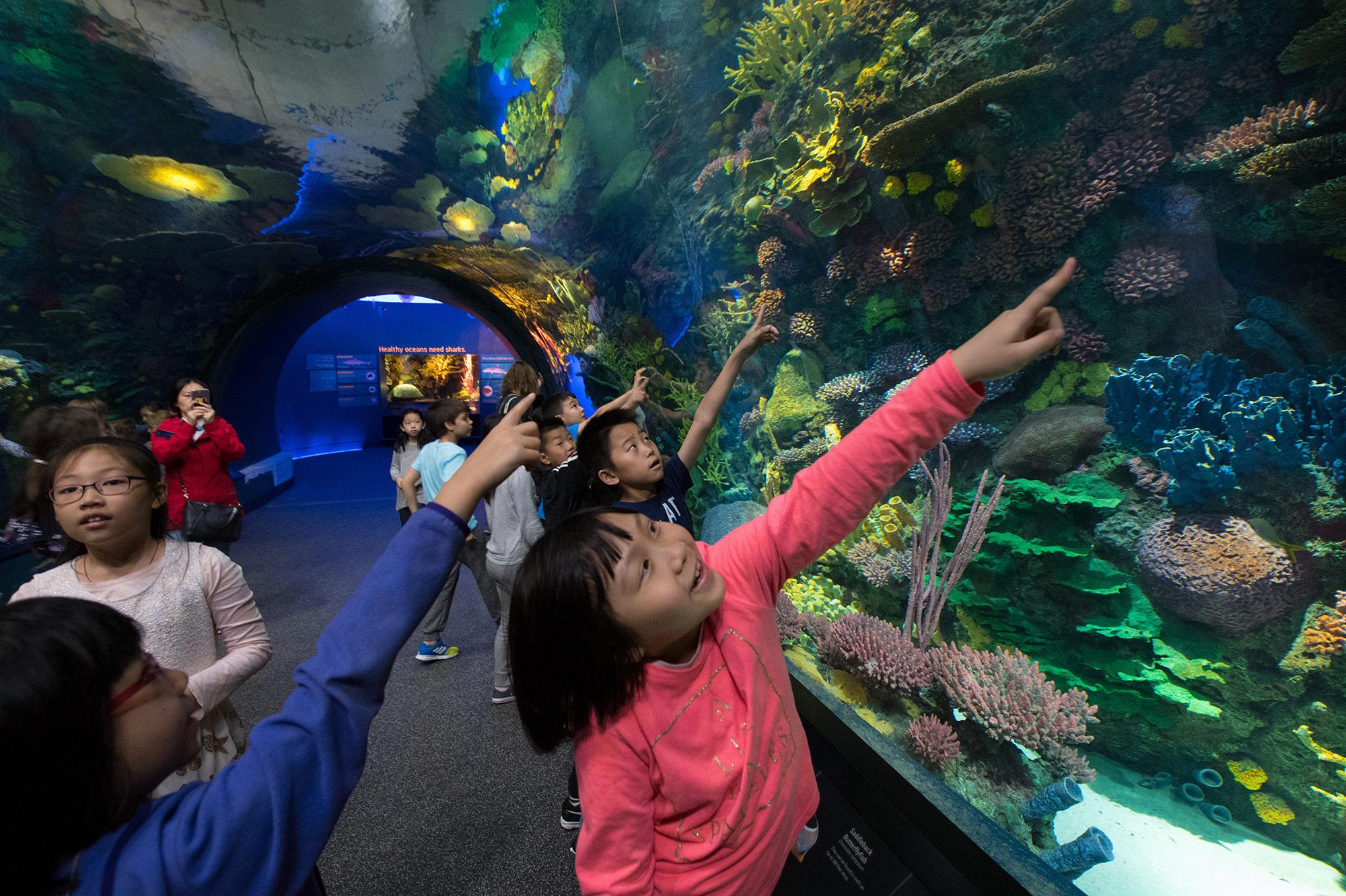 Girl points at aquarium fish