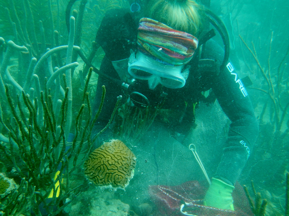 Diver collecting FRT coral