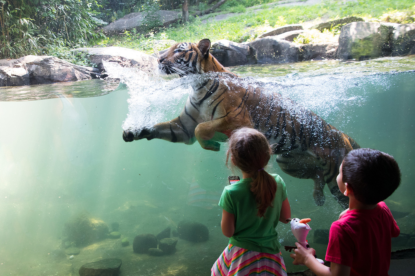 A tiger swims behind exhibit glass while two children look on