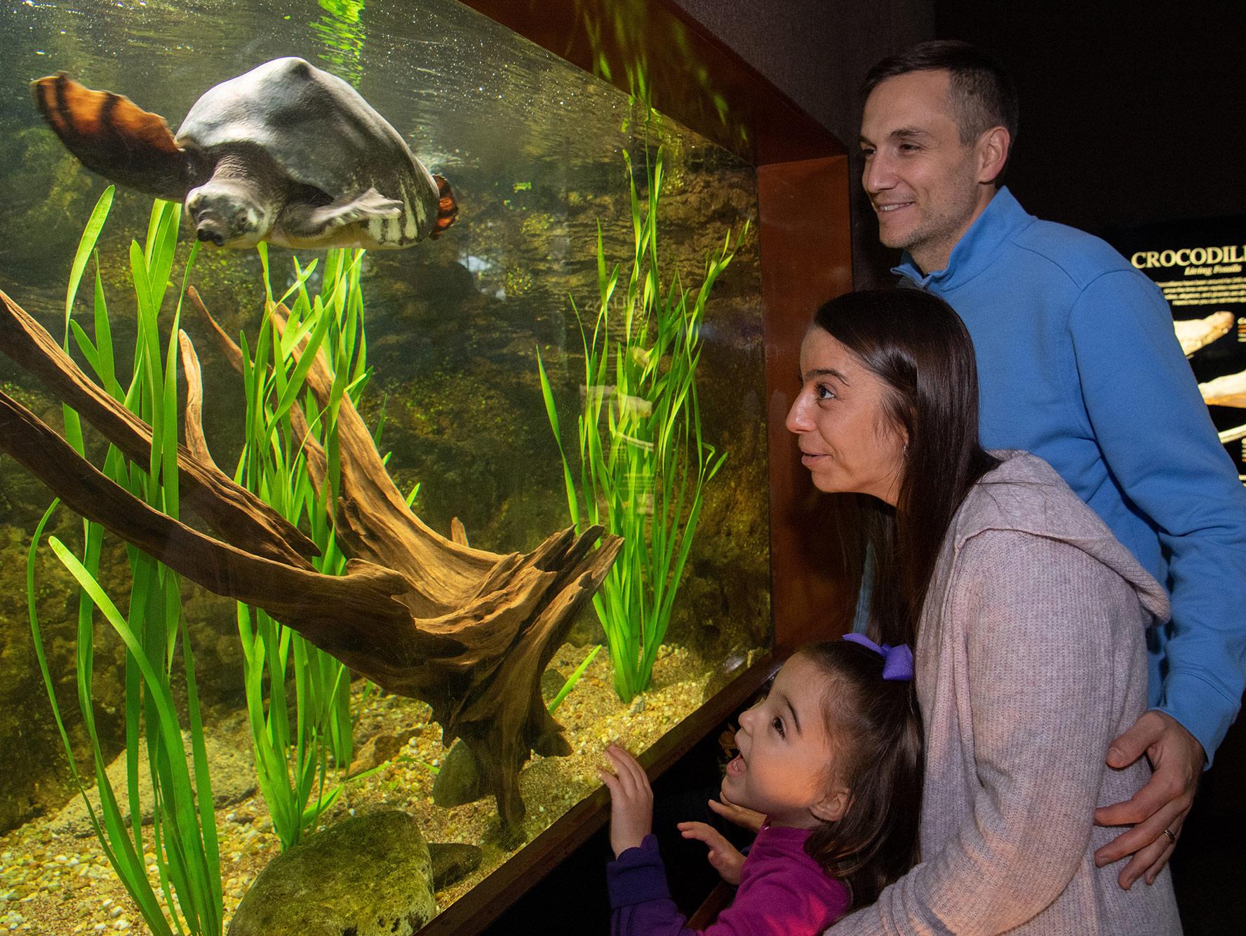 family looks at aquarium