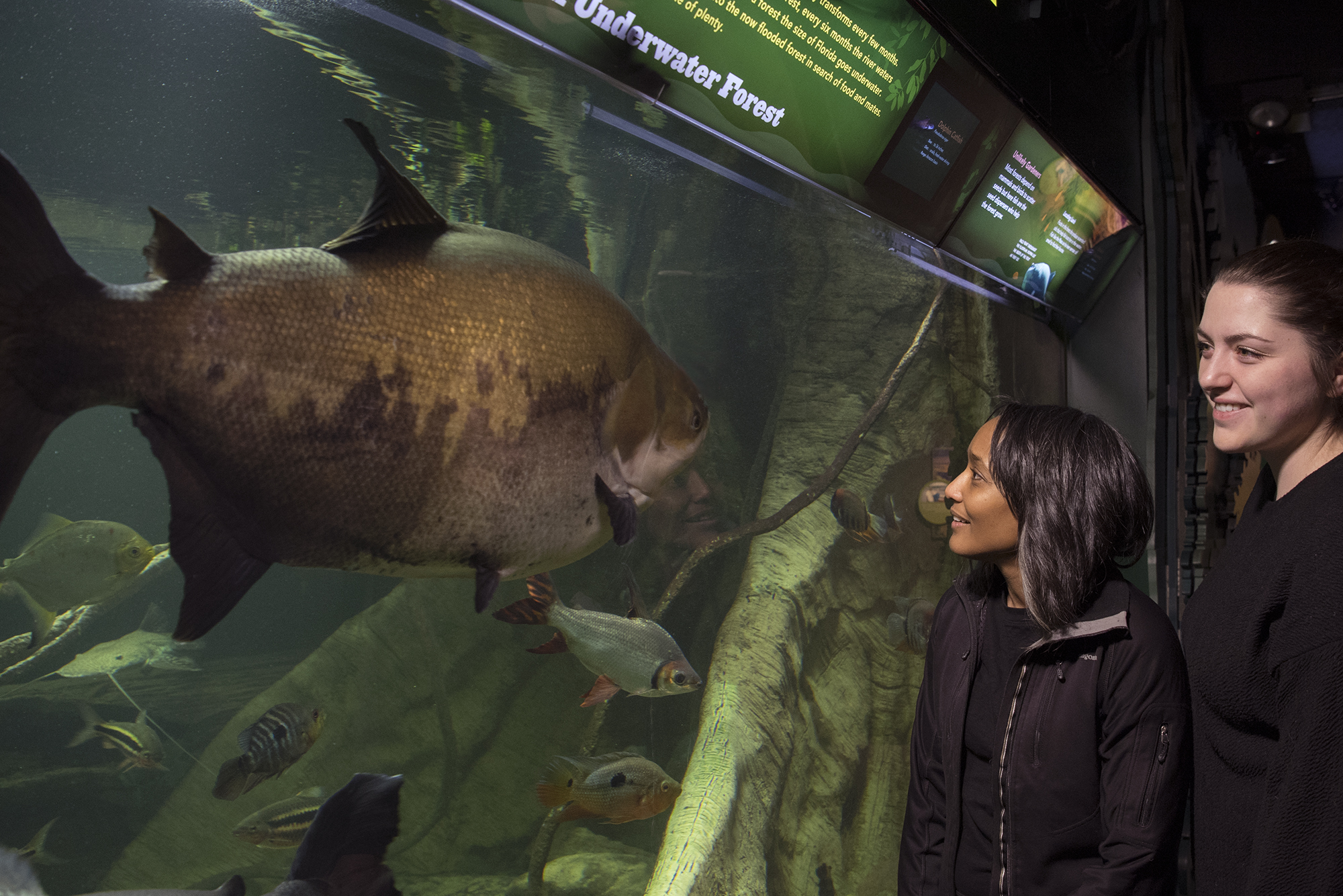 Two guests look at a large fish through aquarium glass.