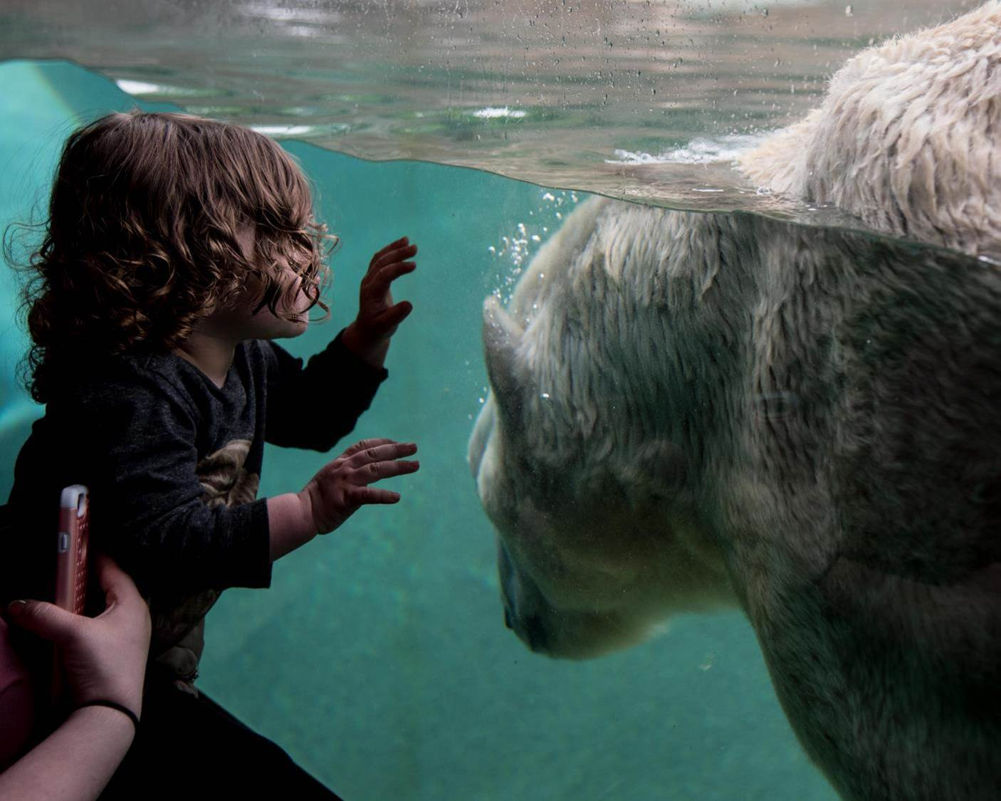 A child with a polar bear swimming on the other side of the glass