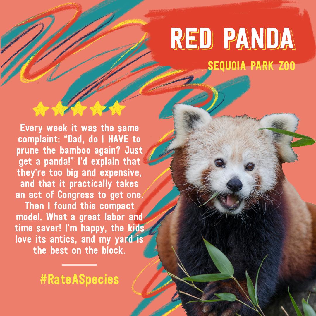 Red panda Animal Review