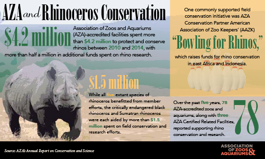 Image of Rhinoceros conservation infograph