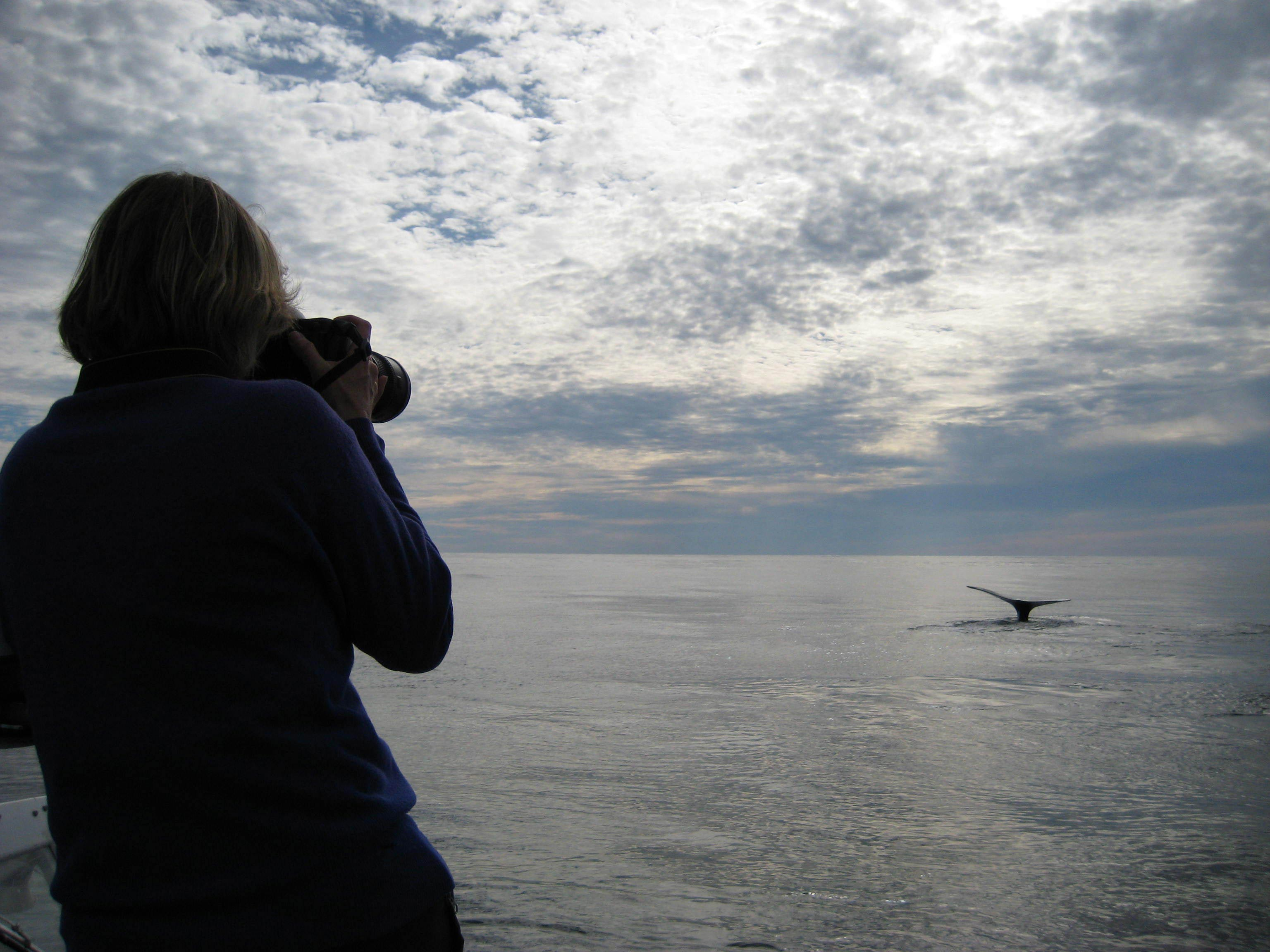 New England Aquarium researcher watching a right whale