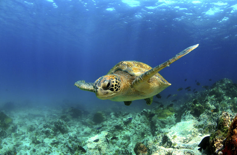 Sea Turtle | Saving Animals From Extinction