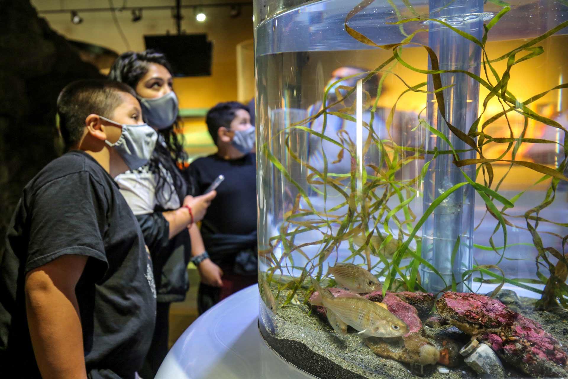 A family looks at fish at Seattle Aquarium