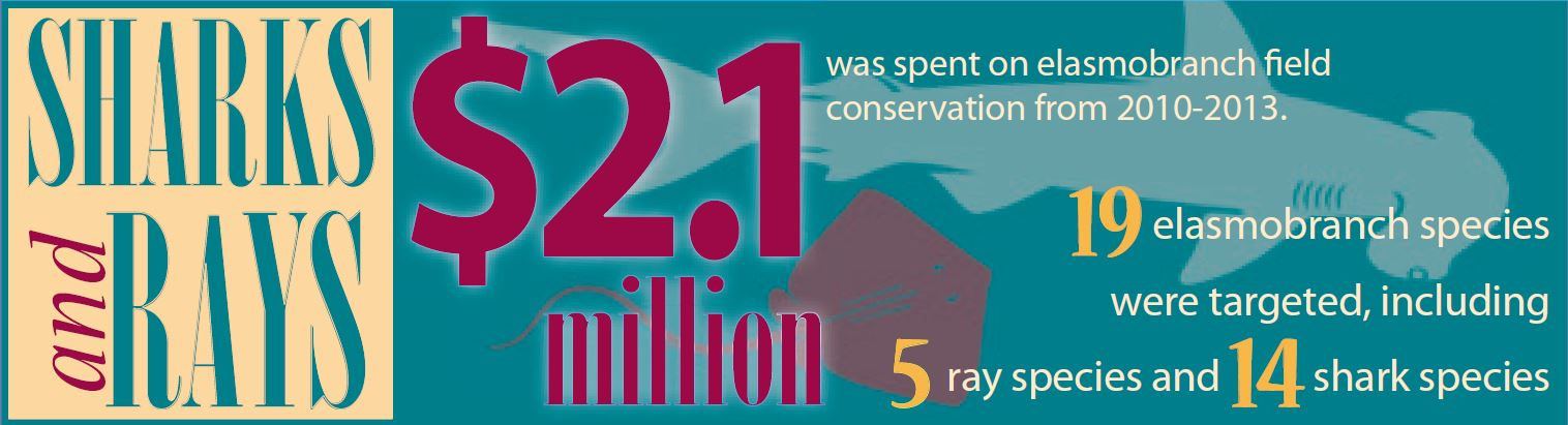Image of Shark and Ray Conservation Infographic