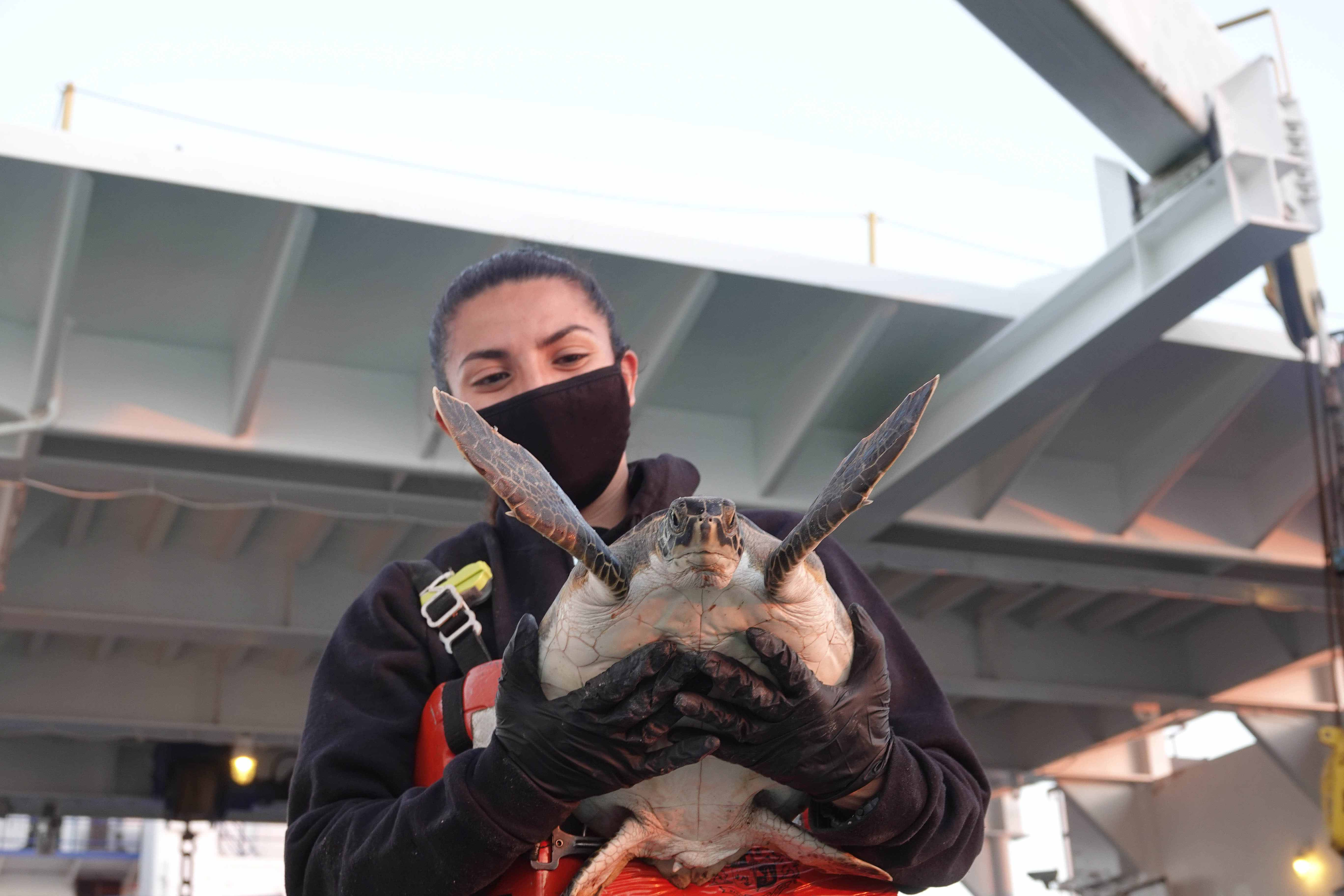 Texas State Aquarium employee holding a sea turtle