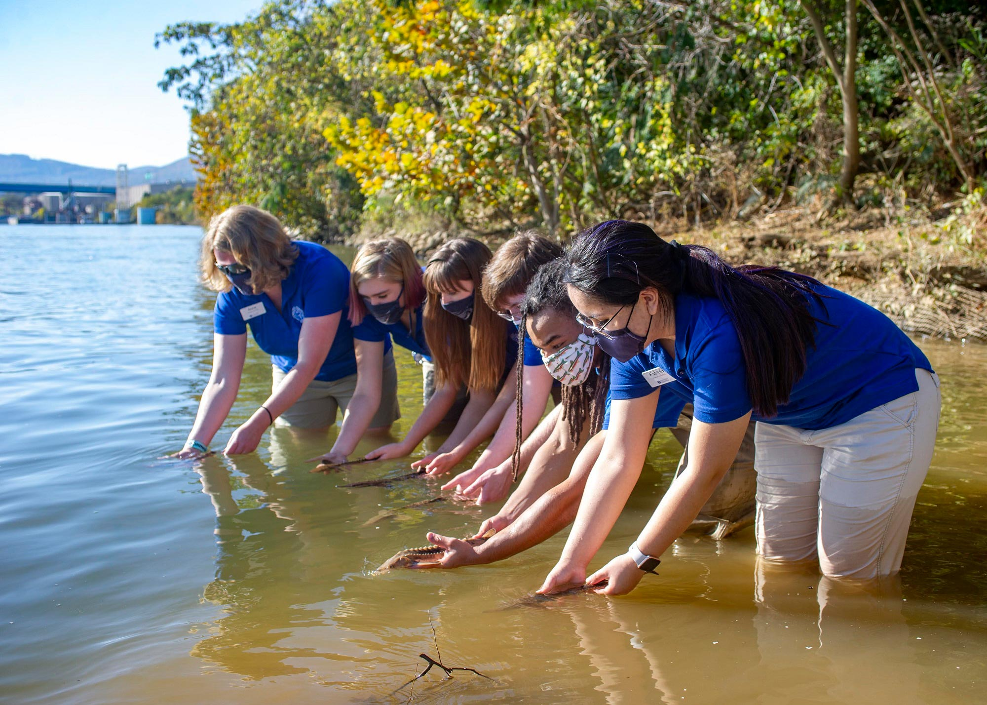 Tennessee Aquarium Conservation Institute staff release juvenile Lake Sturgeon into the Tennessee River