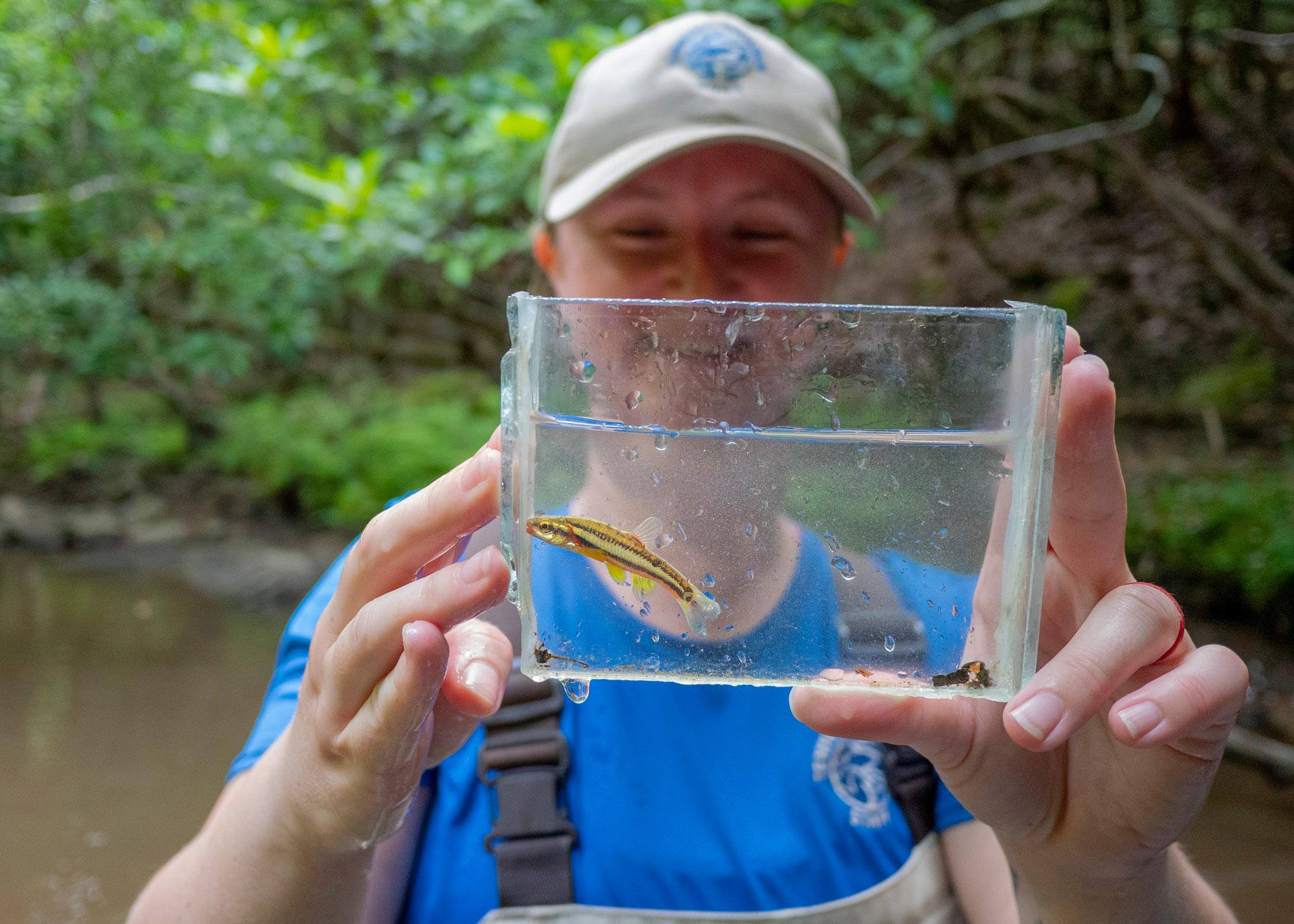 Tennessee Aquarium Science Coordinator Shawna Fix displays endangered Laurel Dace collected during a population survey