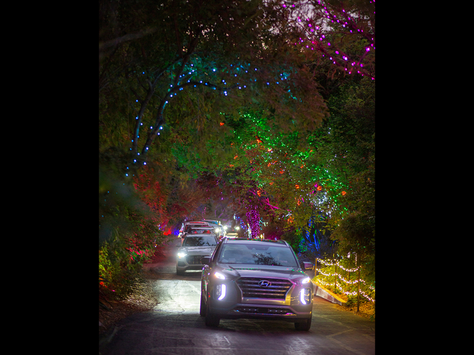 Cars driving through Zoo-Lights holiday light drive-thru event