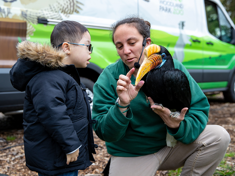A Woodland Park Zoo animal keeper and educator shows a little boy the beak of a hornbill