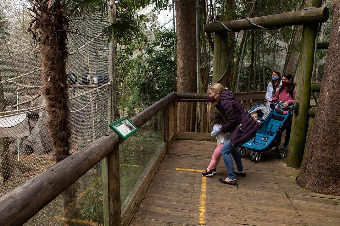 Guests at Zoo Atlanta looking at black and white colobus monkeys