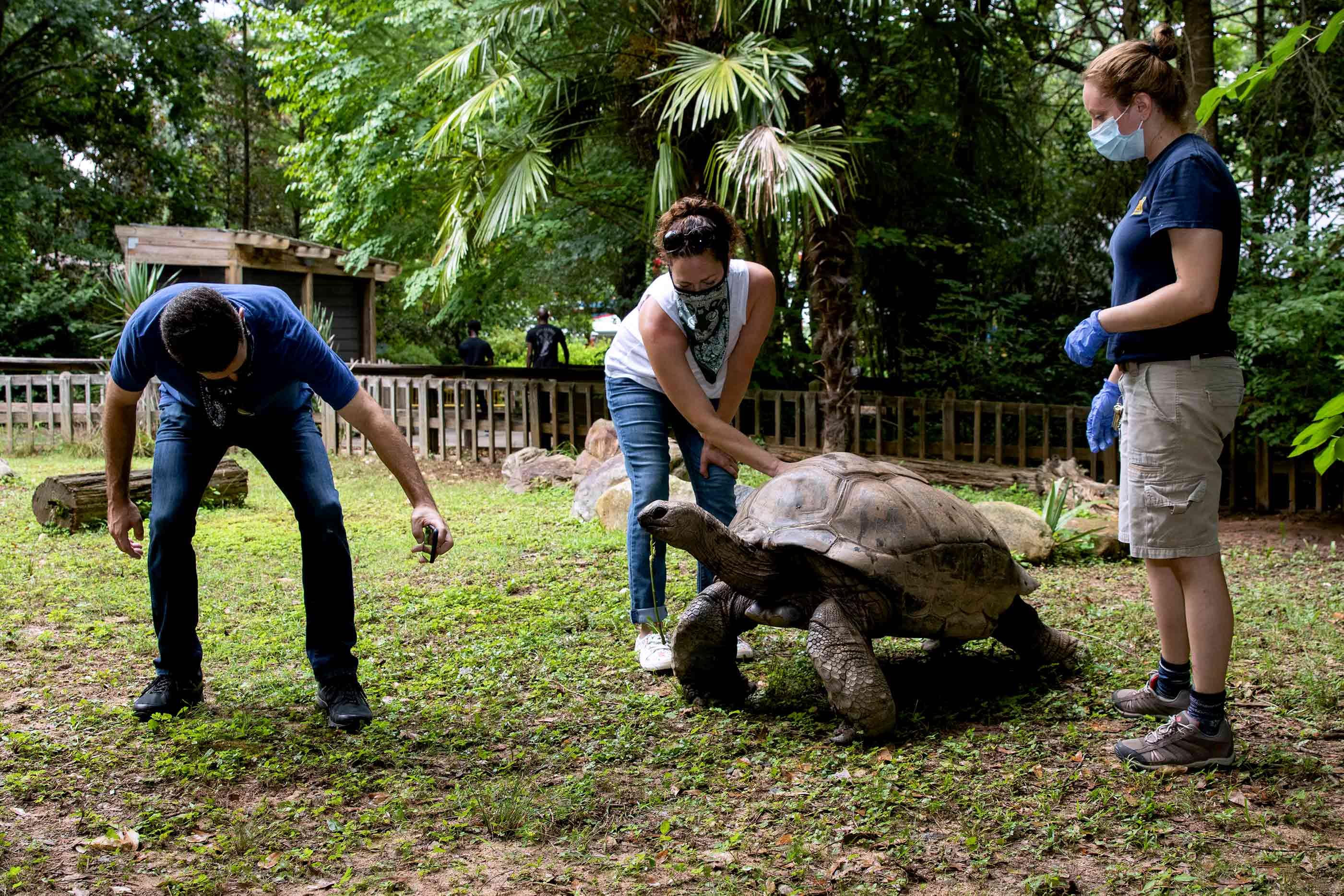Zoo Atlanta's wild encounter with an Aldabra tortoise