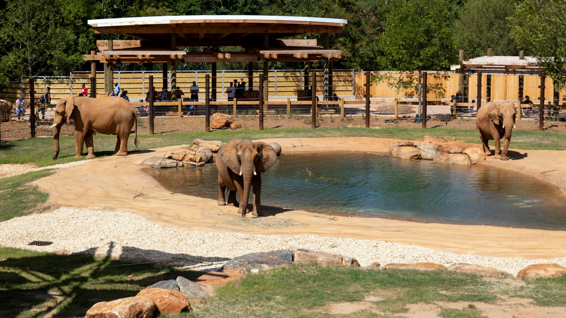 Image of African Savanna exhibit at Zoo Atlanta
