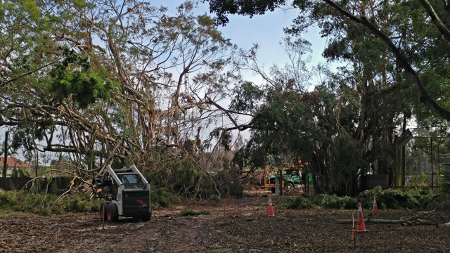 Crews from The Davey Tree Expert Company work to remove debris from Rainforest Grove, our event space. Date: 9/12/17