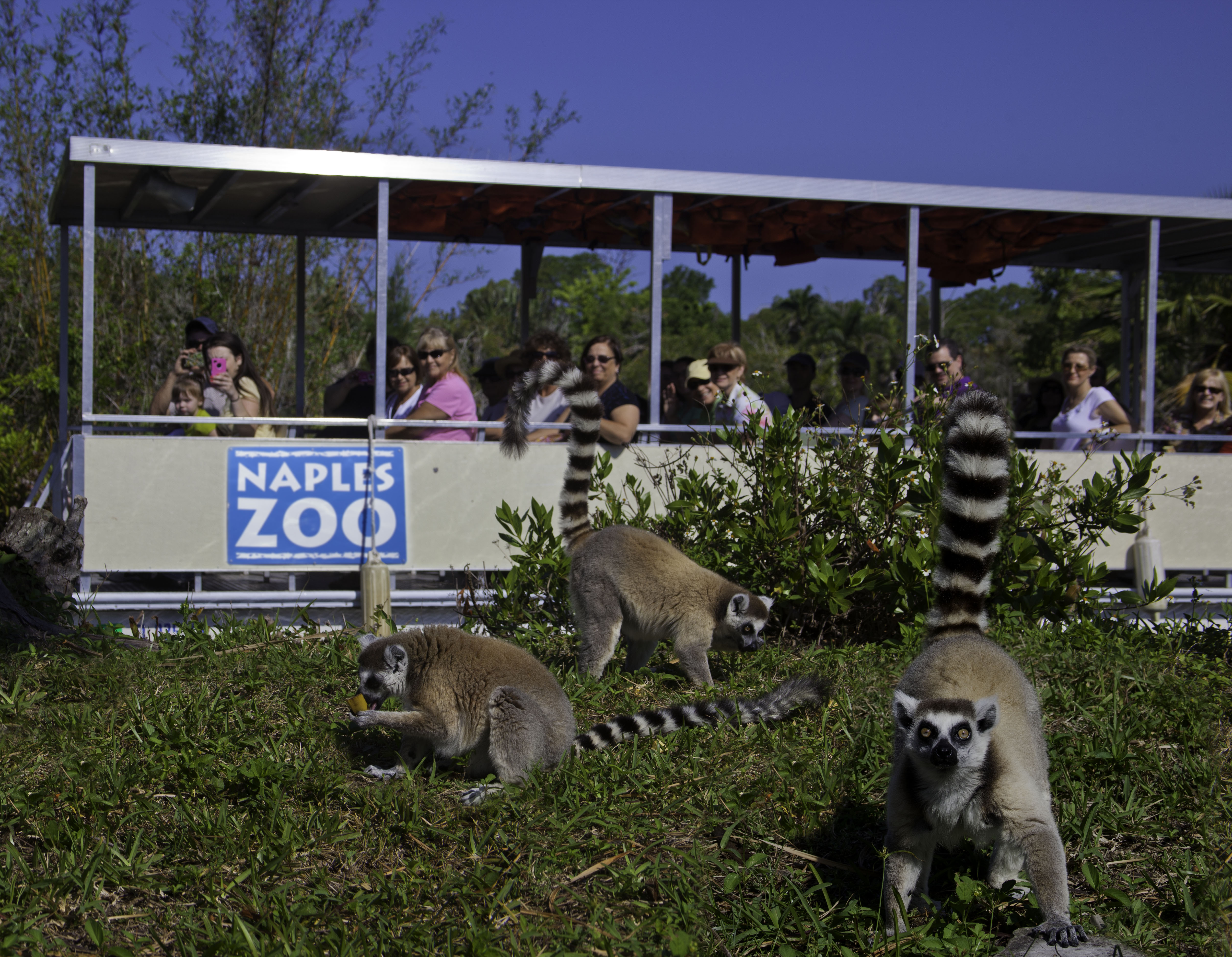 Visitor Information Naples Zoo at Caribbean Gardens
