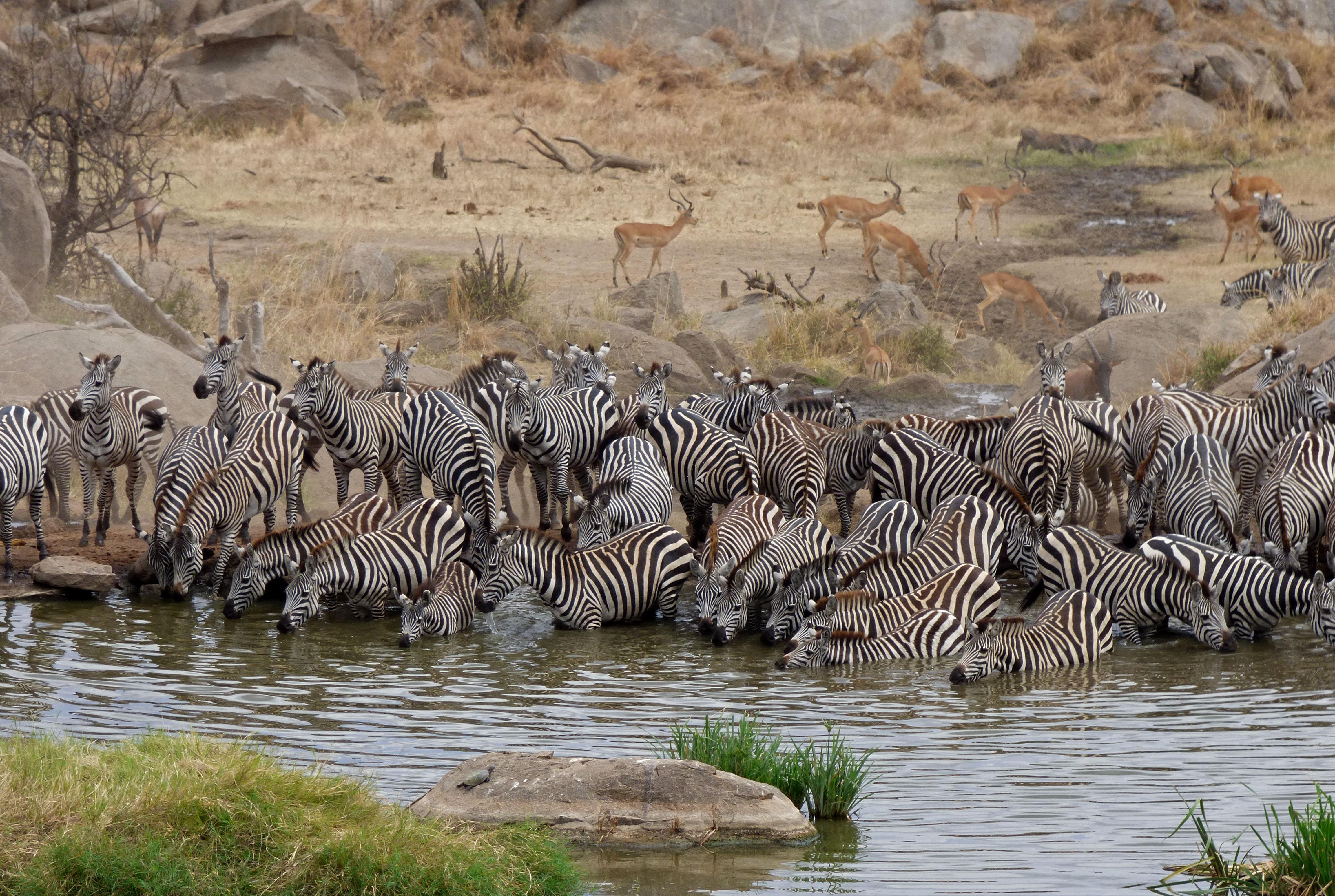 Zoo Travel African Safari