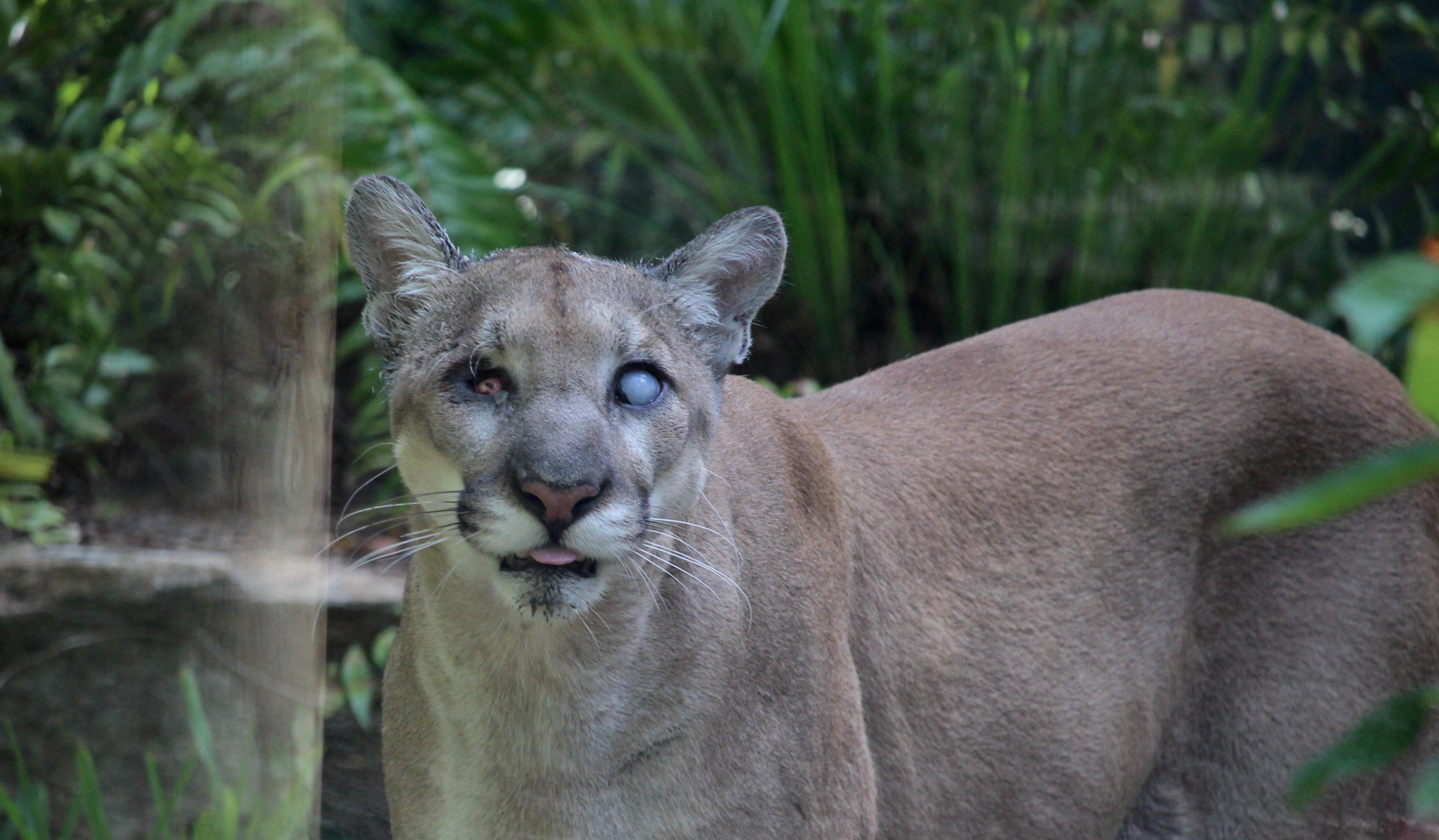 naples zoo blog