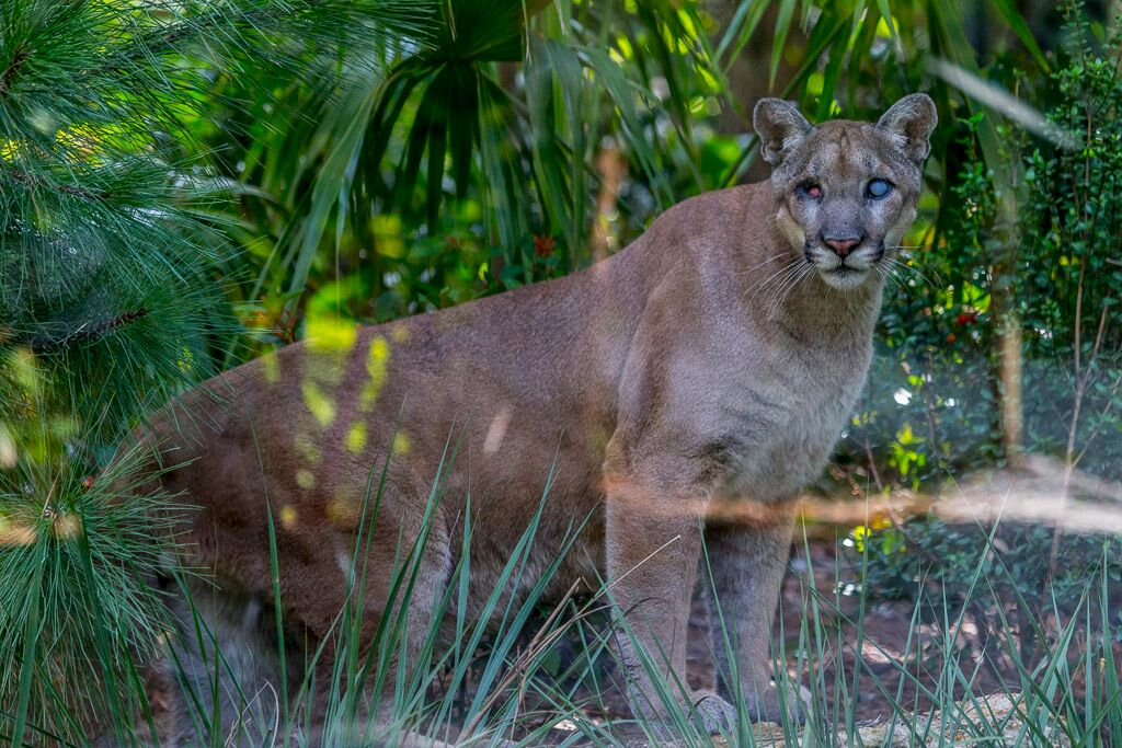 Conservation Programs Naples Zoo at Caribbean Gardens