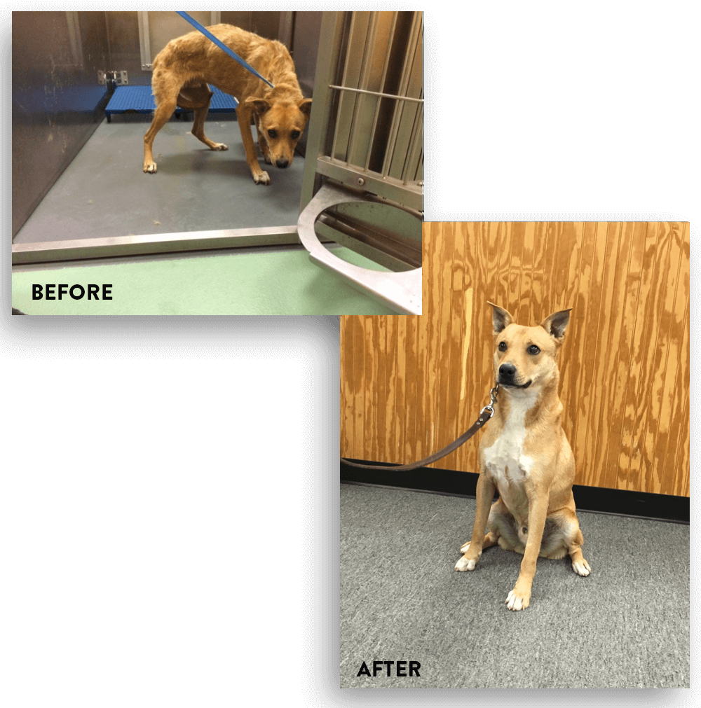 Aggressive Dog Training - Memphis, TN | Taming the Wild