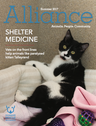 Alliance Magazine Summer 2017 Cover