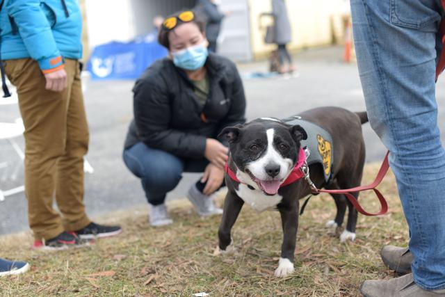 Adoptable dog at adoption event