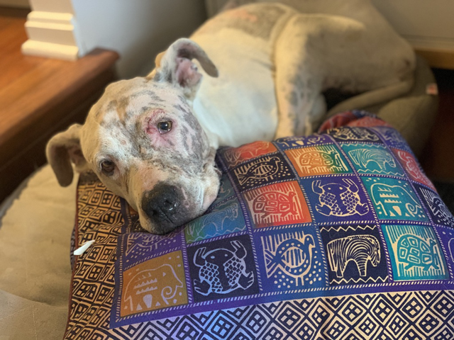 Ladybell resting in an HRA foster home