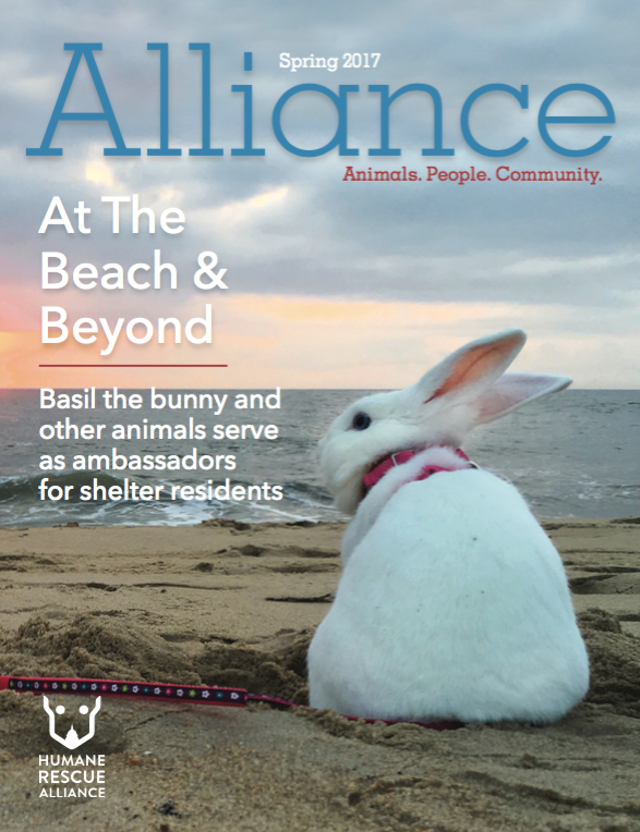 Alliance Magazine Spring 2017 cover