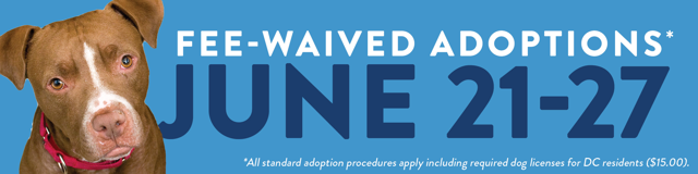 Fee waived adoptions June 21-27 2021