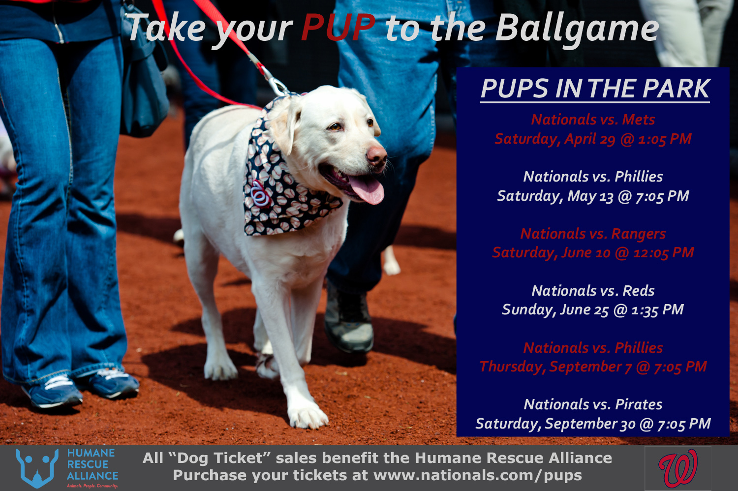 Take Your Pup to the Ball Game