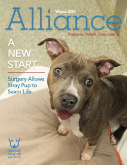 Alliance Magazine Winter 2016 Cover
