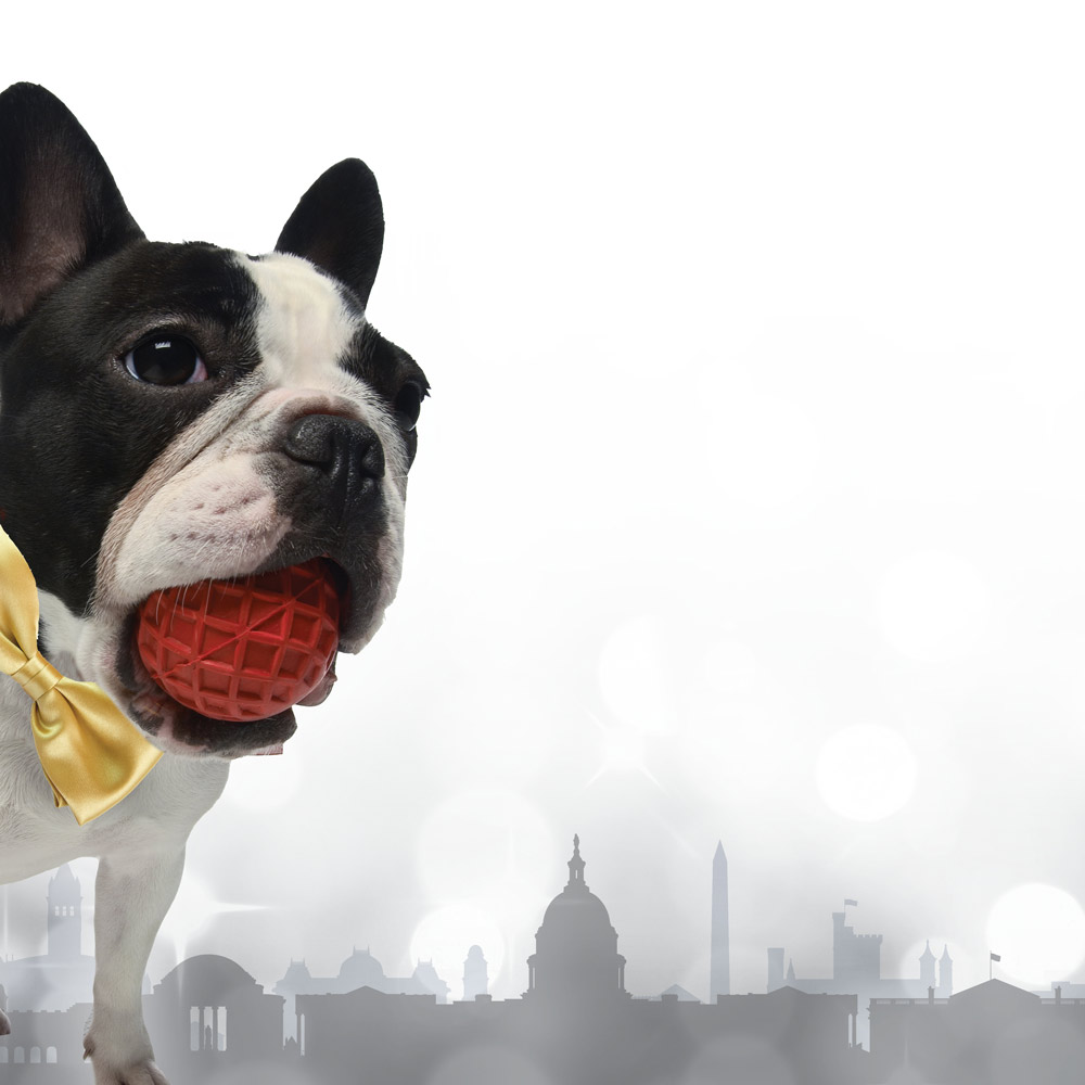 dog with city scape in the background
