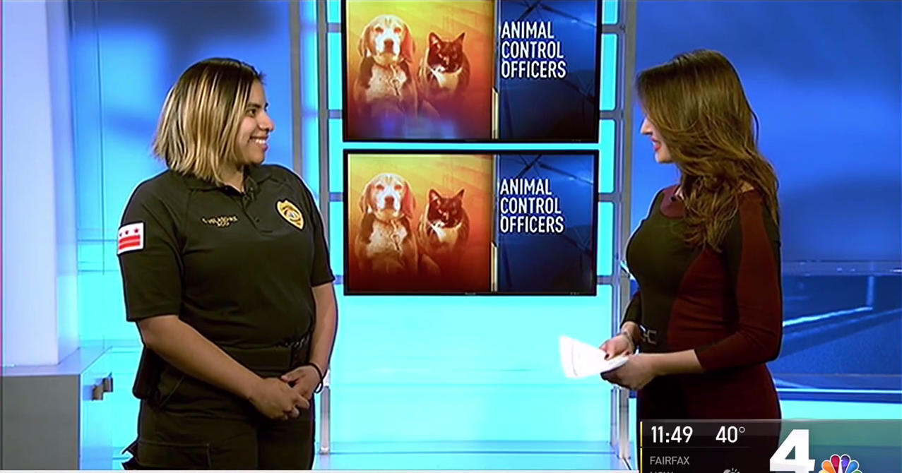 banner image for  NBC4 and HRA: Animal Control Officers, Stray Companion Animals and Wildlife Encounters