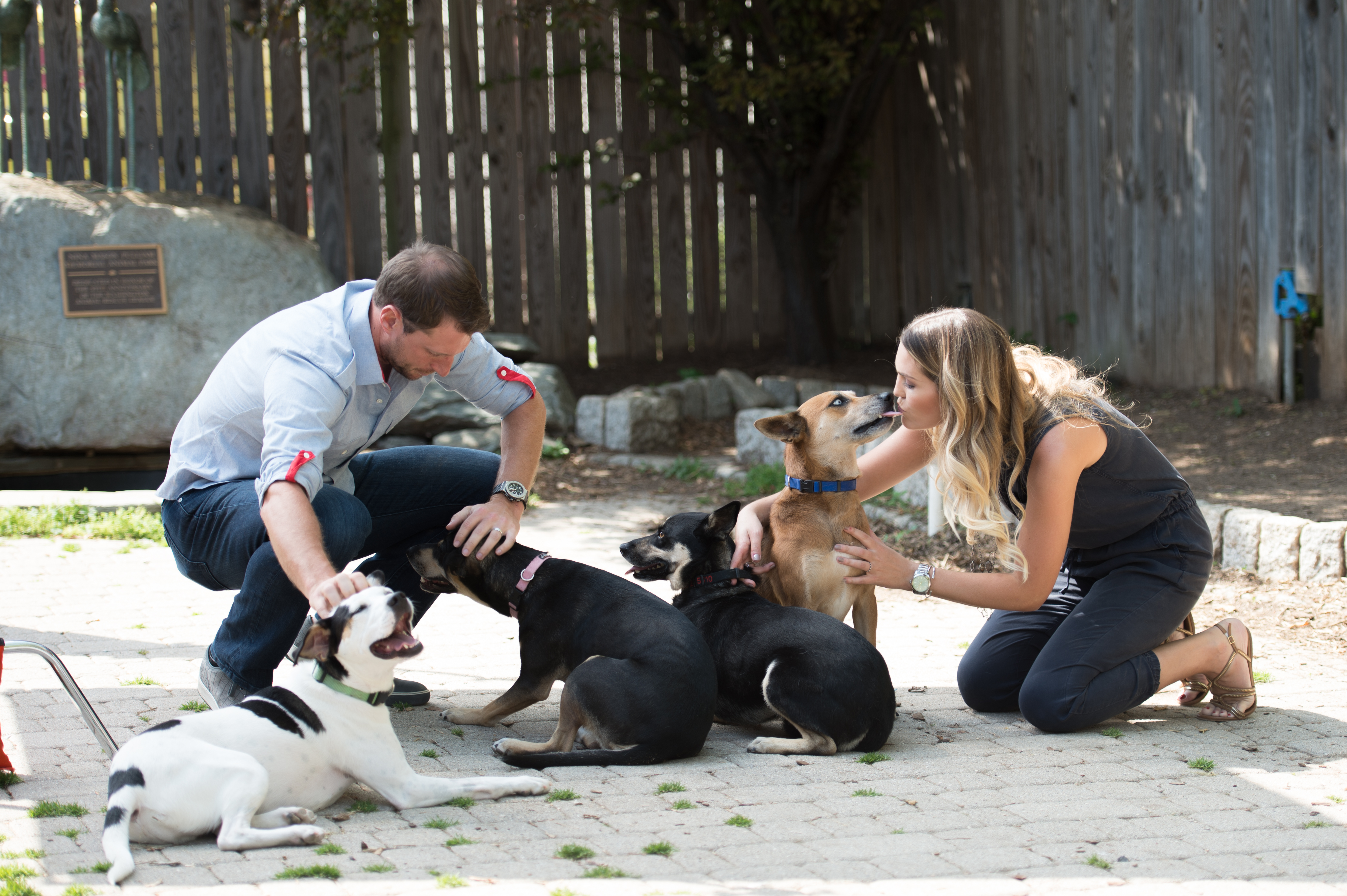All-Star Pitcher Max Scherzer and Erica Scherzer with their dogs at the Humane Rescue Alliance