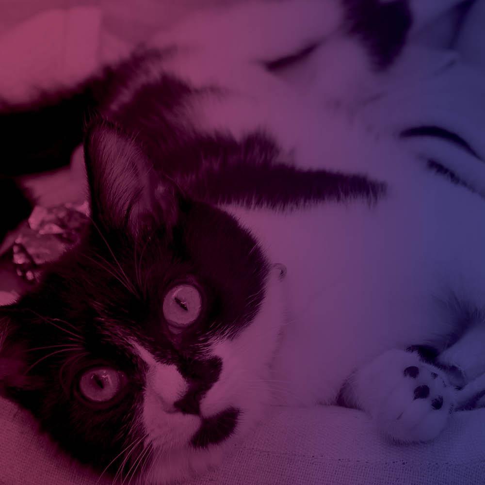 Meow DC