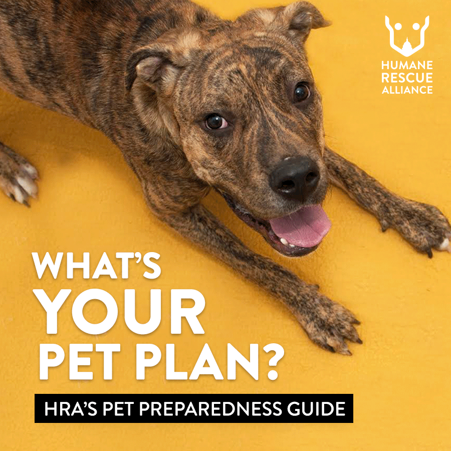 Is your community prepared? Urge community members to have a plan in place for their pets. icon