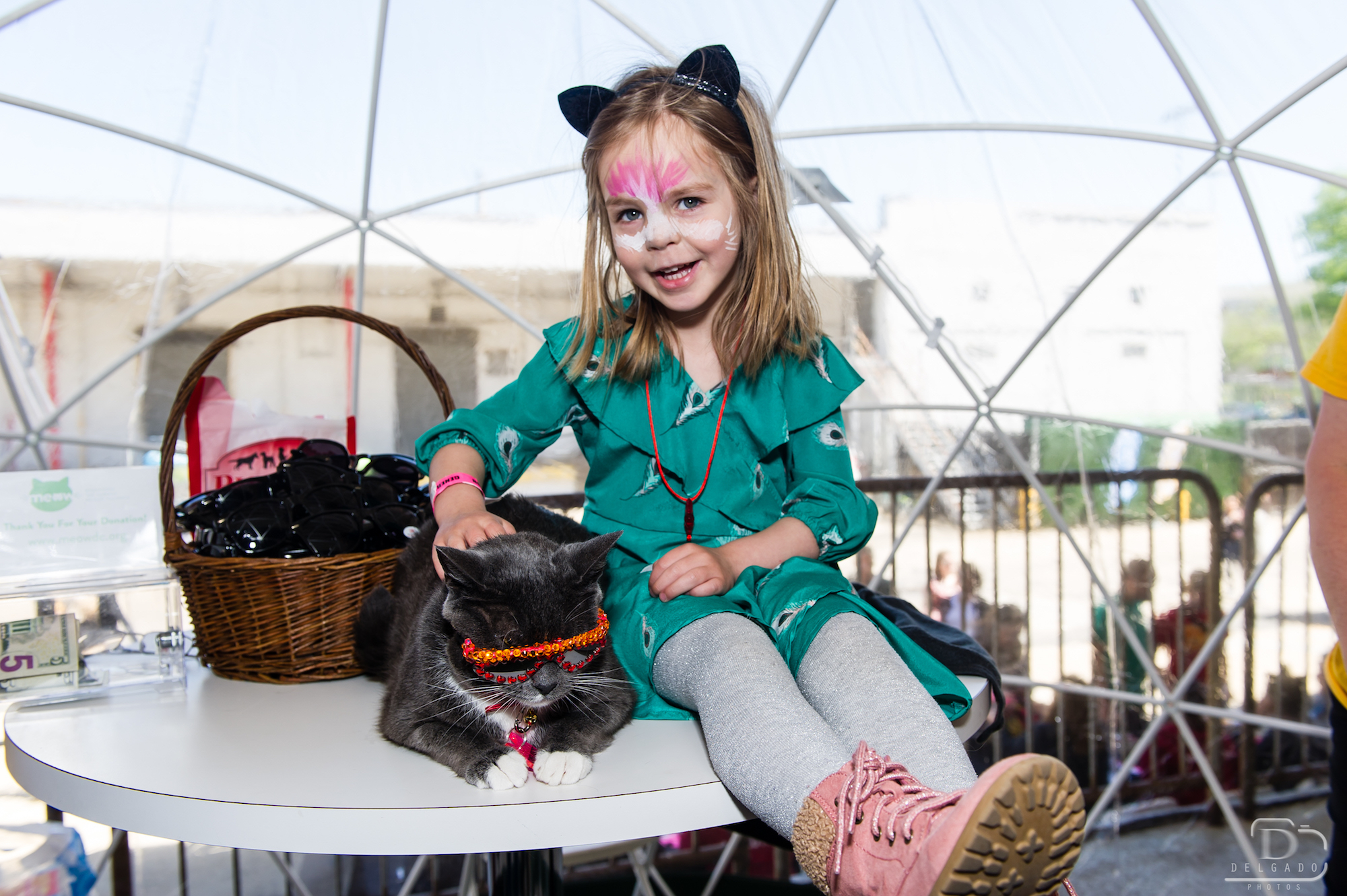 View photos from the first annual Meow DC. icon