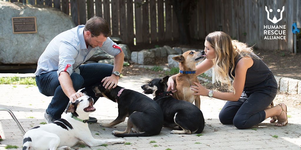 banner image for  Max and Erica Scherzer Cover Adoption Fees to Help Clear Space for Animals Arriving from Texas