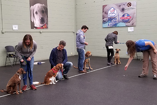 HRA offers training classes at very competitive rates. Our qualified and experienced staff can help guide you and your pet through the common behavior problems and challenges that may face pet owners. icon